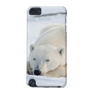 Polar Bear in winter iPod Touch (5th Generation) Case
