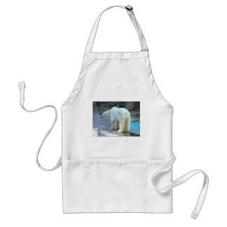 Polar bear in zoo aprons