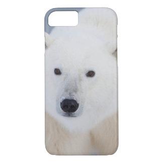 Polar Bear iPhone 8/7 Case