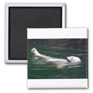 Polar bear just lazing square magnet