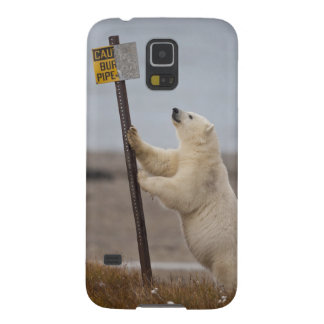 Polar bear leans on sign for buried pipe galaxy s5 case
