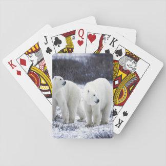 Polar Bear Love Poker Deck