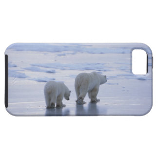 Polar Bear Mother and Cub Case For The iPhone 5