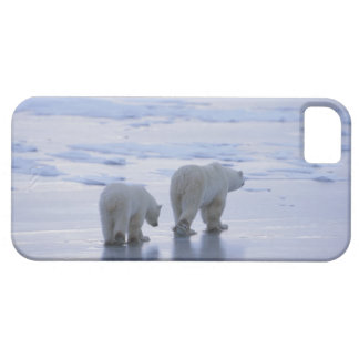 Polar Bear Mother and Cub iPhone 5 Cover