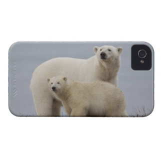 Polar bear mother and her cub rest in the tundra Case-Mate iPhone 4 case