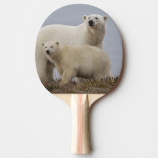 Polar bear mother and her cub rest in the tundra ping pong paddle