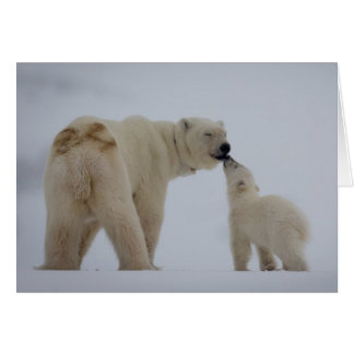 Polar Bear mother with cub Card