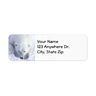Polar Bear Nap Return Address Label
