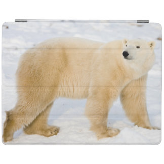 Polar Bear near Hudson Bay 2 iPad Cover
