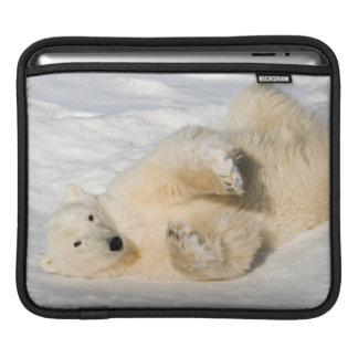 Polar Bear near Hudson Bay iPad Sleeve