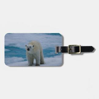 Polar Bear on pack ice Luggage Tag