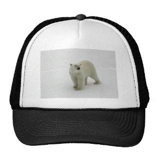 Polar Bear on the Arctic ice Hat