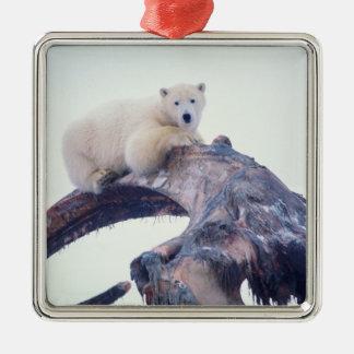 Polar bear on top of a bowhead whale jaw bone, christmas ornament