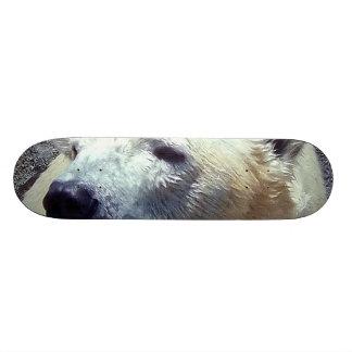 Polar Bear Photo Closeup Nikita Kansas City Zoo Skate Boards