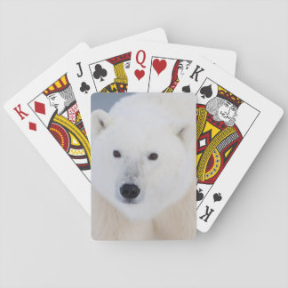Polar Bear Poker Deck