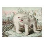 Polar Bear Poster Postcard