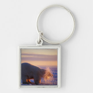 Polar bear pulling its head out of a hole in the Silver-Colored square key ring