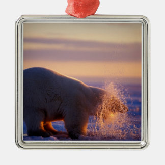 Polar bear pulling its head out of a hole in the Silver-Colored square decoration