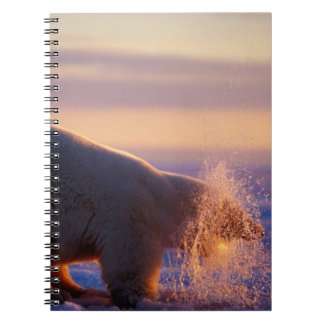 Polar bear pulling its head out of a hole in the spiral notebook