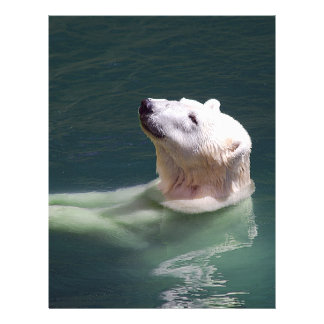 Polar bear resting 21.5 cm x 28 cm flyer