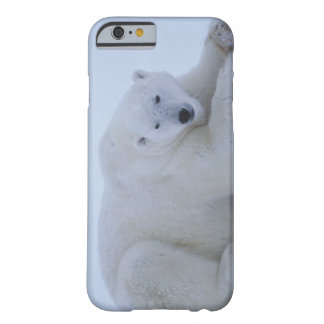 Polar Bear Resting in Snow Barely There iPhone 6 Case