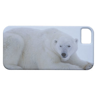 Polar Bear Resting in Snow iPhone 5 Cases