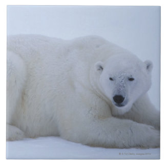 Polar Bear Resting in Snow Tile