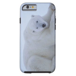 Polar Bear Resting in Snow Tough iPhone 6 Case