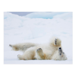 Polar bear rolling in snow, Norway Postcard