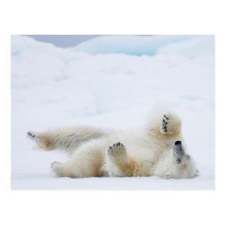 Polar bear rolling in snow, Norway Postcard