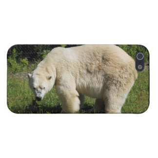 polar bear scowling cover for iPhone 5/5S