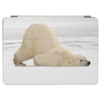 Polar bear scratching itself on frozen tundra iPad air cover