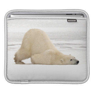 Polar bear scratching itself on frozen tundra iPad sleeve