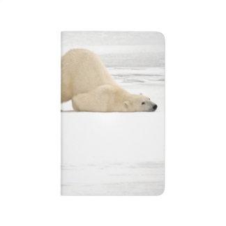 Polar bear scratching itself on frozen tundra journal