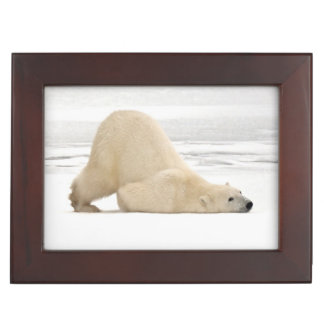 Polar bear scratching itself on frozen tundra keepsake box