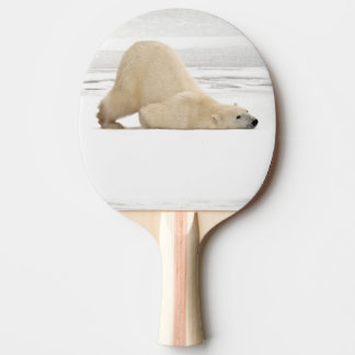 Polar bear scratching itself on frozen tundra ping pong paddle