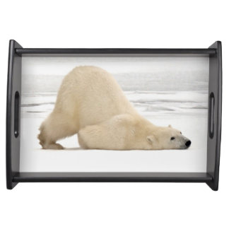 Polar bear scratching itself on frozen tundra serving tray