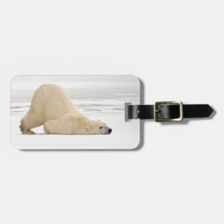 Polar bear scratching itself on frozen tundra tag for bags