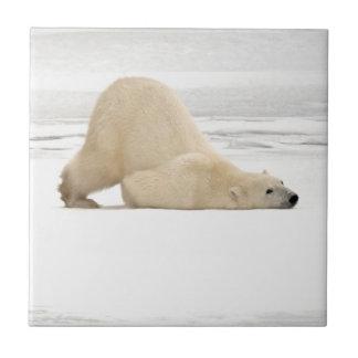 Polar bear scratching itself on frozen tundra tile