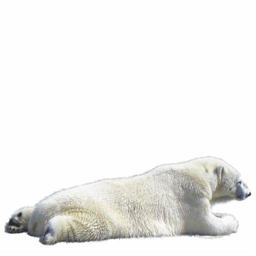 POLAR BEAR (sculpted) Wildlife Magnet Photo Sculpture