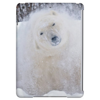 Polar bear shaking snow off on frozen tundra