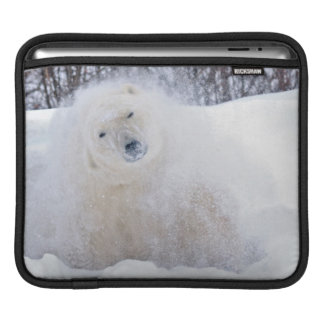Polar bear shaking snow off on frozen tundra iPad sleeve
