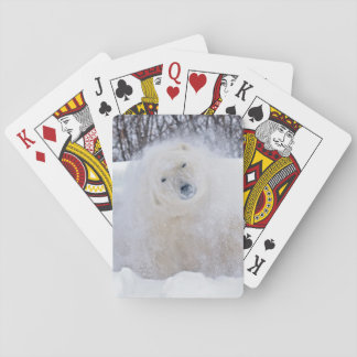 Polar bear shaking snow off on frozen tundra playing cards