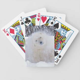 Polar bear shaking snow off on frozen tundra poker deck