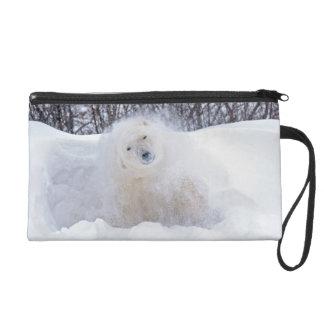 Polar bear shaking snow off on frozen tundra wristlet