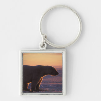 Polar bear silhouette, sunrise, pack ice of Silver-Colored square key ring