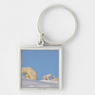 Polar bear sow feeding on grass to get her Silver-Colored square key ring