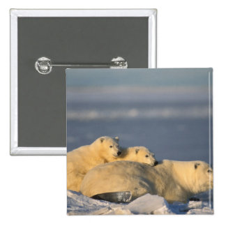 Polar bear sow lying down with spring cubs on 15 cm square badge