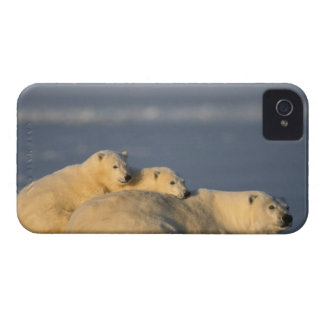 Polar bear sow lying down with spring cubs on iPhone 4 cover