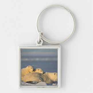 Polar bear sow lying down with spring cubs on Silver-Colored square key ring